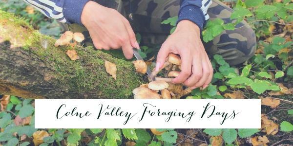 Colne Valley Foraging Day